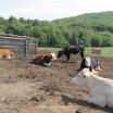obor vaci