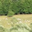 oile laurentiu